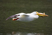BRD 22 RF0003 01