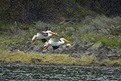BRD 22 RF0004 01