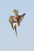 BRD 22 WF0001 01