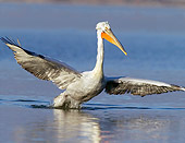 BRD 22 WF0003 01