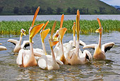 BRD 22 WF0005 01