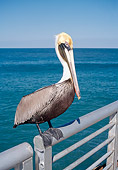 BRD 22 WF0007 01