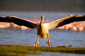 BRD 22 JZ0004 01
