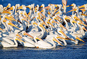 BRD 22 LS0002 01
