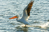 BRD 22 NE0002 01