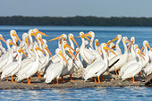 BRD 22 NE0003 01