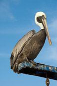 BRD 22 NE0004 01
