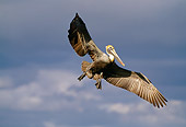 BRD 22 RF0001 01