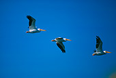 BRD 22 RK0014 04