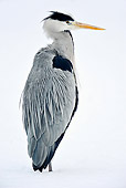 BRD 23 AC0006 01