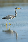 BRD 23 AC0016 01