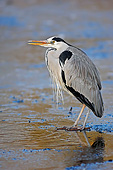 BRD 23 AC0019 01