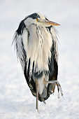 BRD 23 AC0020 01