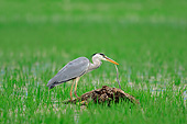 BRD 23 AC0023 01