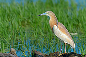 BRD 23 AC0025 01