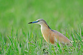 BRD 23 AC0026 01