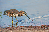BRD 23 AC0030 01