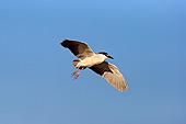BRD 23 AC0033 01