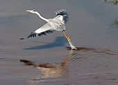 BRD 23 HP0001 01