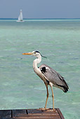 BRD 23 KH0001 01