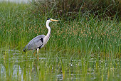 BRD 23 KH0002 01