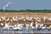 BRD 23 KH0004 01