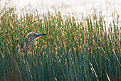 BRD 23 KH0005 01