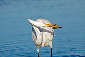 BRD 23 LS0002 01