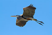 BRD 23 LS0005 01