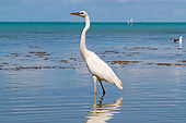 BRD 23 LS0008 01