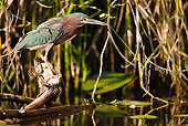 BRD 23 MC0005 01