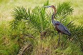 BRD 23 MC0007 01