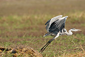 BRD 23 MC0009 01