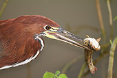 BRD 23 MC0011 01