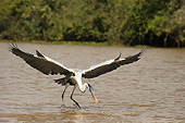 BRD 23 MC0014 01