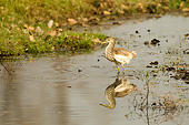 BRD 23 MC0016 01