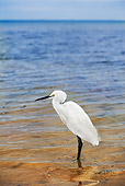 BRD 23 MH0001 01