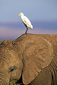 BRD 23 MH0003 01