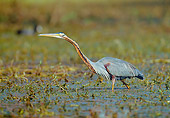 BRD 23 MH0004 01