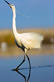 BRD 23 MH0006 01