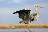 BRD 23 MH0013 01