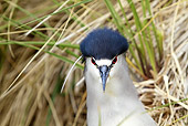 BRD 23 WF0002 01