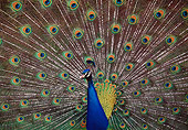 BRD 24 BA0001 01