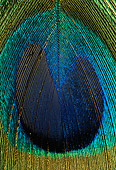BRD 24 TK0002 01