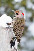 BRD 25 DA0003 01
