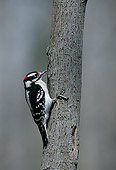BRD 25 GR0001 01