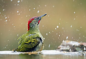 BRD 25 WF0004 01