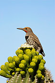 BRD 25 WF0007 01