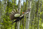 BRD 25 NE0001 01