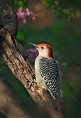 BRD 25 TK0002 01